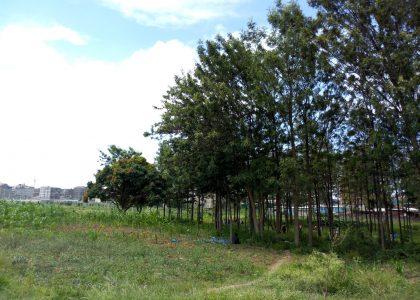 Dandora Green Park